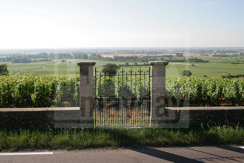 CLAV0002 domaine viticole 1