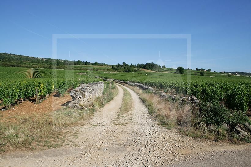CLAV0002 domaine viticole 2
