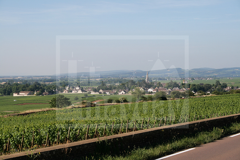 CLAV0002 paysage vigne