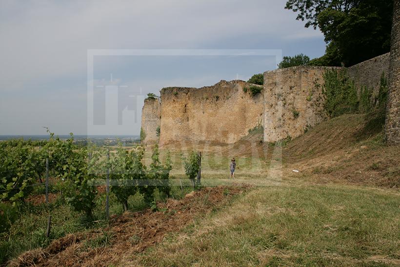 clav0009 chateau ruine vigne 3