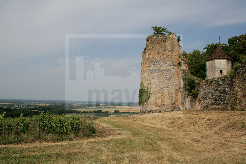 clav0009 chateau ruine vigne 5