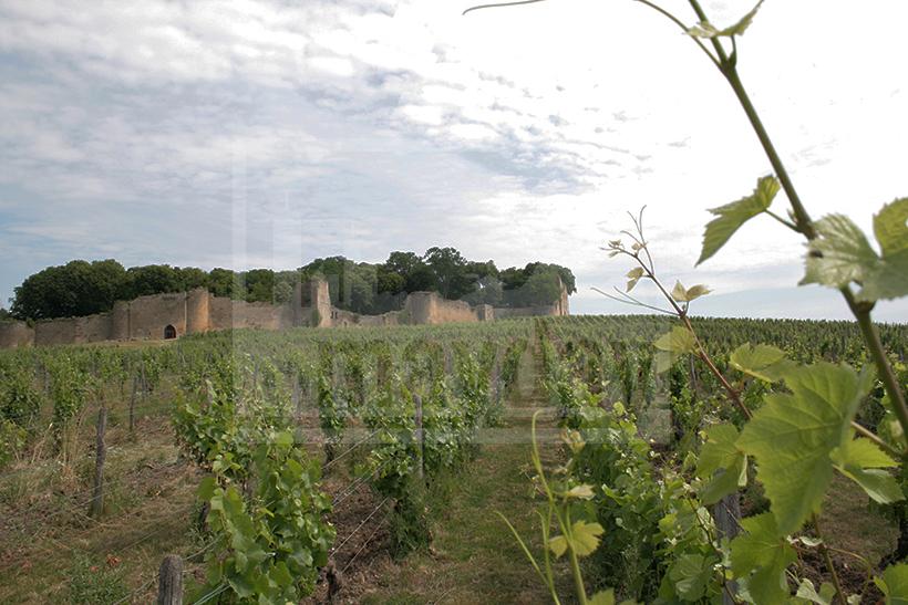 clav0009 chateau ruine vigne 6