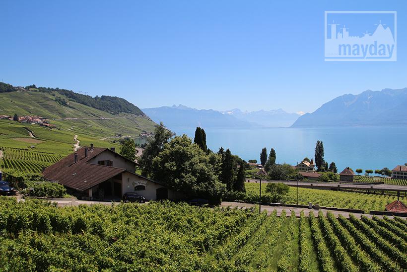 clav0106-leman-suisse-vignes-1