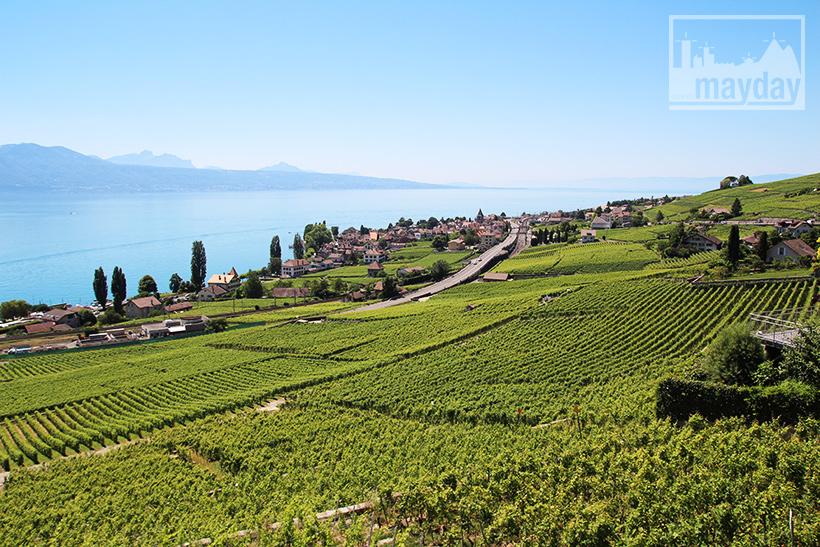 clav0106-leman-suisse-vignes-2
