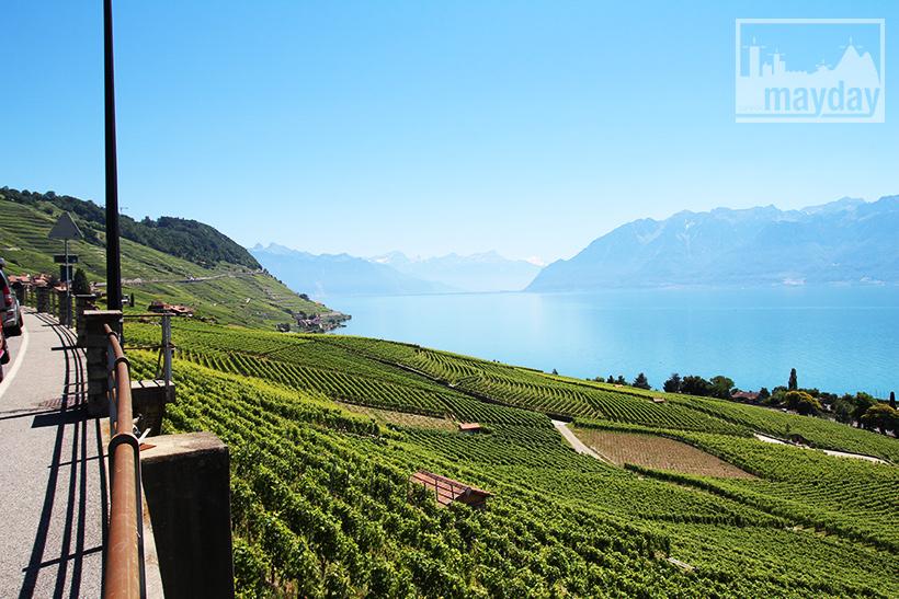 clav0106-leman-suisse-vignes-3