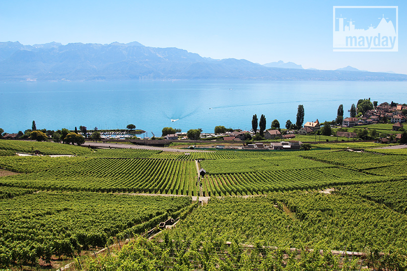 clav0106-leman-suisse-vignes-4