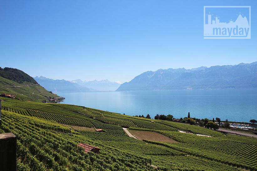 clav0106-leman-suisse-vignes-5