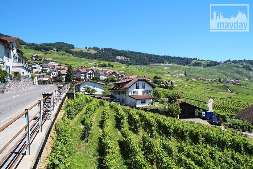 clav0106-leman-suisse-vignes-6