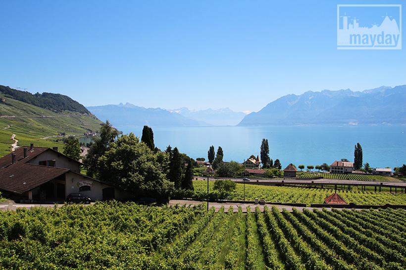 clav0106-leman-suisse-vignes-7