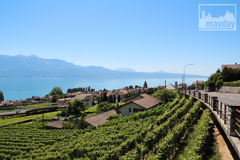 clav0106-leman-suisse-vignes-8
